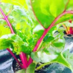 verdura di stagione a km0